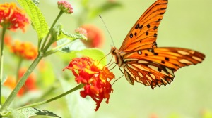 Butterfly-Photography-Wallpaper